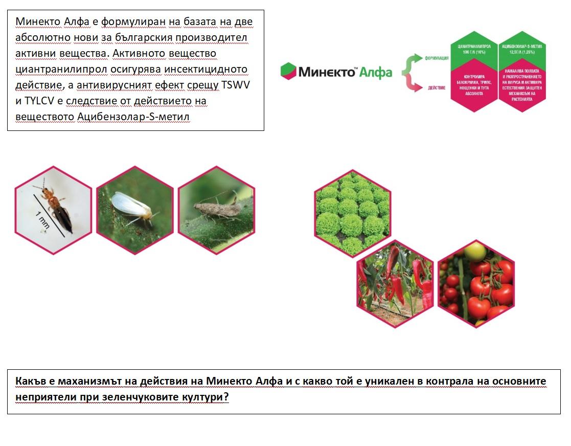 Минекто Алфа е инсектицид както за листно, така и за почвено приложение, който действа системно, чрез абсорбиране през корена и листата.